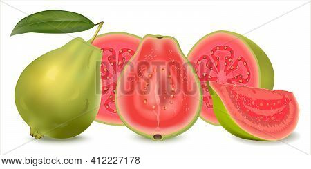 Realistic Illustration Guava. Fresh Whole Guava With Leaves, Half Guava  And Slice Isolated On White