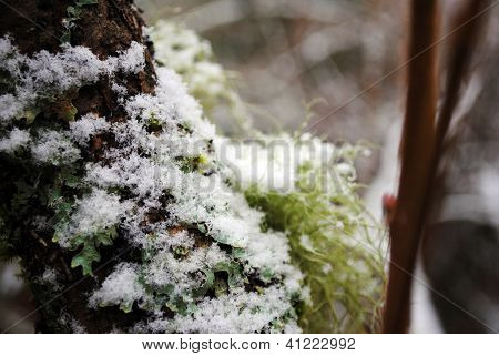 Snow on a tree trunk