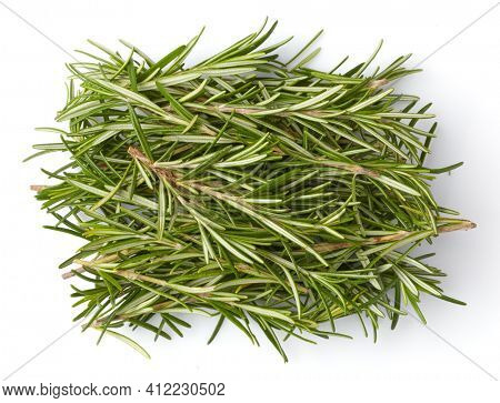 Bunch fresh rosemary top view. Gardening farming fragrant herb spice, isolated on white background.