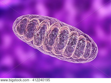 Mitochondria Is A Double Membrane-bound Organelle Found In All Eukaryotic Organisms. Are Related To