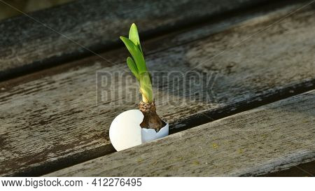 Sprout In The Ground Beautiful Plant Soil Sand Green Vegetables And Plant Natural View  Plant On Woo