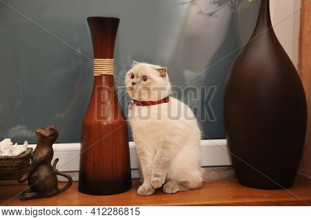 The British Shorthaired Cat Is White In Color On The Window Sill. There Are Vintage Vases Next To It