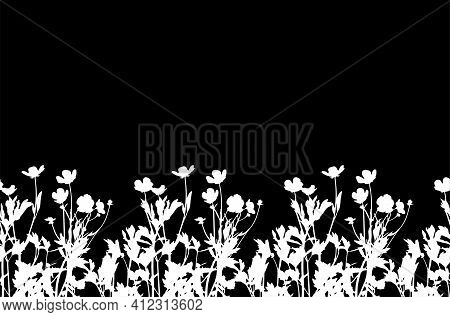 Vector Seamless Buttercup Flowers - Hairy Buttercup (ranunculus Sardous) Border Isolated On Black Ba