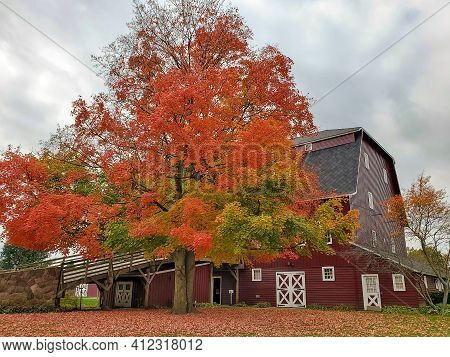 Autumn Oak Tree With Large Red Barn