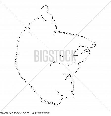 A Drawing Of A Fat Fluffy Cat Lying On Its Back, Its Paws Spread Out In All Directions. Black And Wh