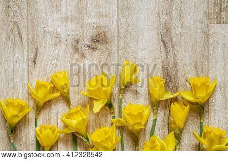 Yellow Narcissi