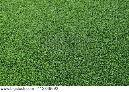 Closeup Of Green Artificial Grass  Or Turf Of A Lawn