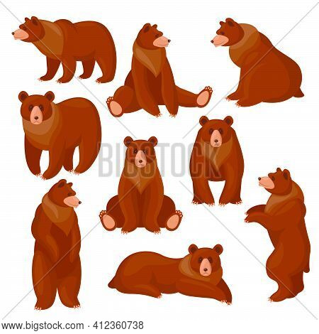 Brown Bears Set. Different Views And Poses Of Cute Cartoon Grizzly Sitting, Standing, Walking Isolat