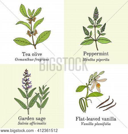 Set Of Amazonian Edible And Medicinal Plants