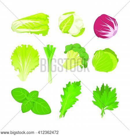 Salad And Cabbage Species Set. Spinach Leaves, Lettuce, Endive, Red Kale, Romaine Isolated On White.