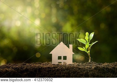 Home And Life Concept. Small Model Home And Green Tree With Sunlight Background.
