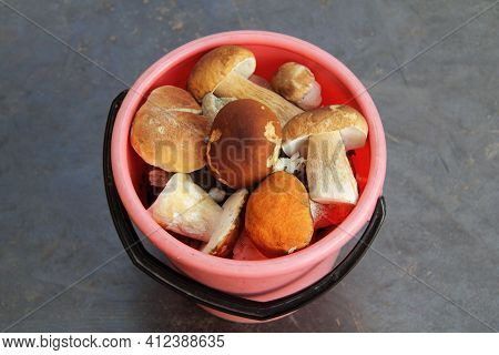 Many Edible Mushrooms In A Pink Bucket. Great Gourmet Dinner