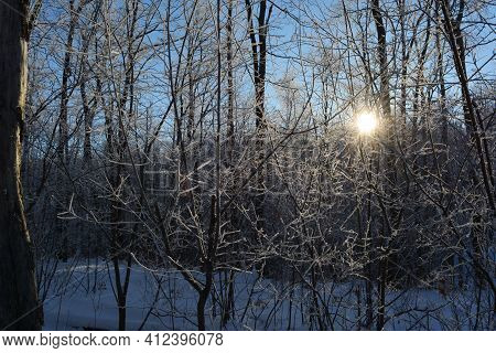 Winter Forest In Hoarfrost With Sun Behind The Trees