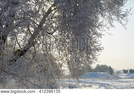 Winter Scene. Tree Branches Covered By White Snow On The Background Of Wintry Landscape..