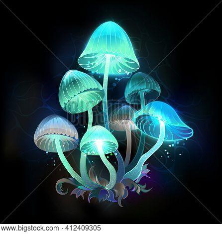 Mysterious, Bioluminescent, Blue, Green Toadstools On Night, Dark, Glowing Background. Glowing Mushr