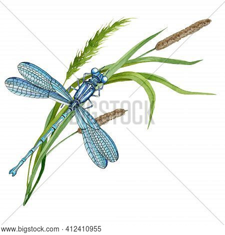 Dragonfly On Green Grass. Hand Drawn Watercolor Illustration. Elegant Insect And Wild Meadow Herbs.