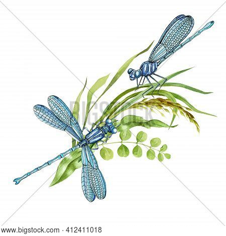 Pair Of Dragonflies And Wild Meadow Grass. Two Elegant Insects And Summer Herbs. Watercolor Illustra