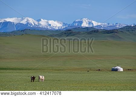 Mongolian landscape with mountain steppe with ger and herd of horses, sheep and cow. Western Mongolia