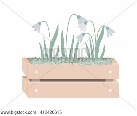 Cartoon Snowdrops In Wooden Box With Moss. Spring Design In Scandinavian Style. Vector Illustration