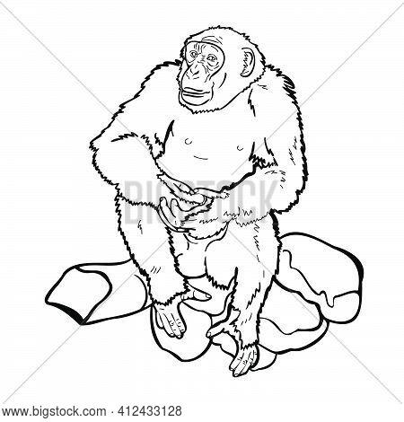 Chimpanzee Sitting On Rock.
