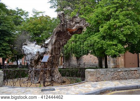 Soria, Spain - 26 September 2012: Monument In Homage To A Dry Elm Tree To Which The Writer Antonio M