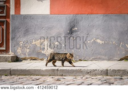 Cat Walking Down The Street With Colourful House Wall On The Background. Beautiful, Big, Brown, Stri