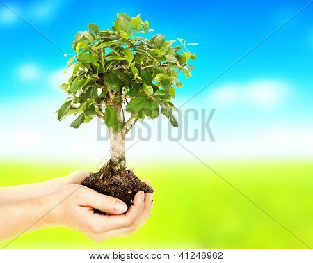 Woman hands holding plant over nature background