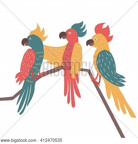 Three Exotic Parrots Set Sitting On Brunches. Tropical Birds And Parrot Collection Vector Illustrati