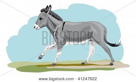 galloping Donkey