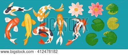 Koi Carp Asian Fishes, Top View Of Colorful Goldfishes, Pink Lotus Flowers And Leaves