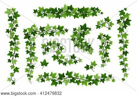 Green Ivy Creeper Branches Isolated On White Background. Hedera Vine Frames And Borders, Botanical D