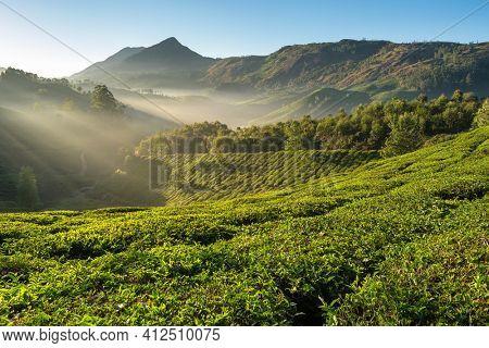 Beautiful fresh green tea plantations landscape in Munnar, Kerala state, India