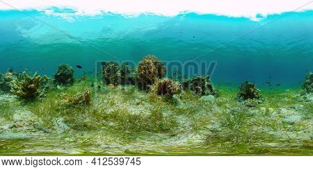 Underwater Tropical Reef View. Tropical Fish Reef Marine. Soft-hard Corals Seascape. Philippines. Vi