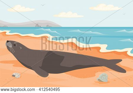 Representative Of Oceanic Wildlife Liying On Coastline. Cute Seal On Sandy Beach Near Ocean