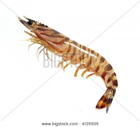Image set of Prawn in isolated white background poster