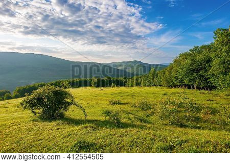 Green Grass On The Meadow In Mountains. Sunny Summer Morning In Carpathian Countryside. Rosebush On