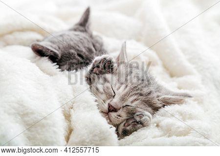 Cute Tabby Kitten Closed His Eyes And Doze Nap Relax. Cat Kid Pet. Small Tabby Gray Mammal Animal Ki