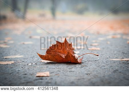 Perspective View Closeup With Shallow Depth Of Field With Brown Dead Leaf On City Park Alley In Autu
