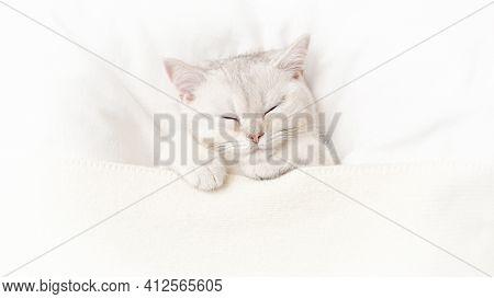 Wide Banner Cute White Kitten Sleeps On A White Bed