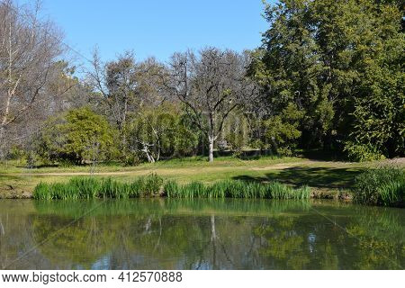 FULLERTON, CALIFORNIA - FEBRUARY 7, 2018: Fullerton Arboretum pond. The 26-acre botanical garden houses a collection of plants from around the world.