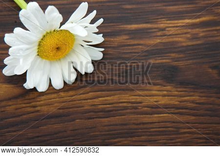 White Marguerite On Brown Wooden Background.copy Space