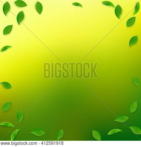 Falling Green Leaves. Fresh Tea Random Leaves Flyi