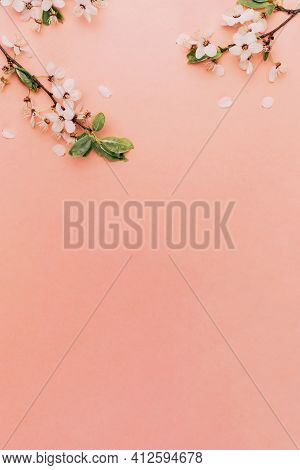 Cherry Tree Blossom. April Floral Nature And Spring Sakura Blossom On Soft Pink Background. Banner F