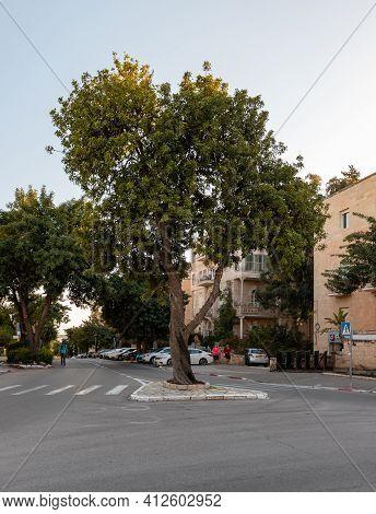 Jerusalem, Israel, February 27, 2021 : Evening View Of The Quiet, Green Street Of Zeev Jabotinsky In