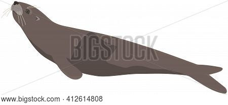Cartoon Seal Isolated On White Background. Representative Of Wildlife And Fauna Of Antarctic Sea
