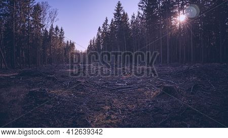 The Sad Sight Of A Felled Forest, Where Only Stumps Protrude From The Ground And The Forest In The D