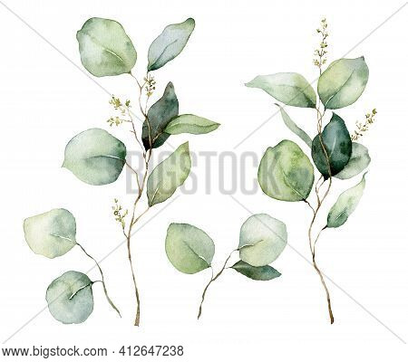 Watercolor Floral Set Of Eucalyptus Seeds, Branches And Leaves. Hand Painted Silver Dollar Eucalyptu
