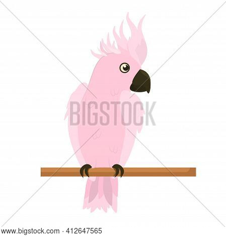 Vector Illustration Of A Pink Cockatoo Parrot Sitting On A Branch. Isolated On A White Background