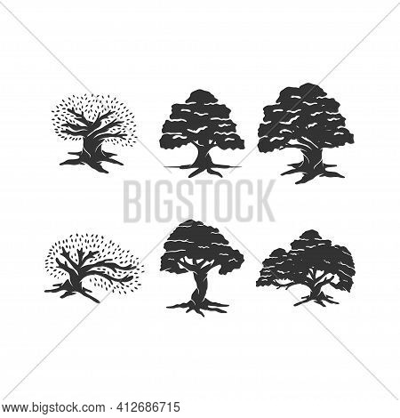Oak Tree Illustration Concept Idea Set Sign