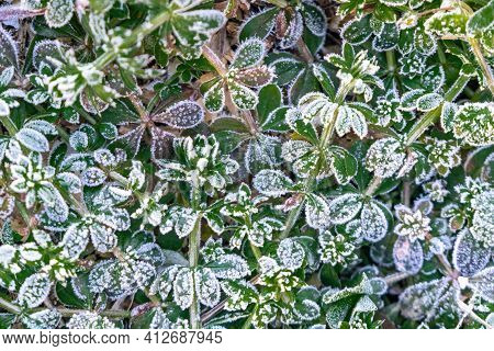 Selective Focus. First Frost On A Frozen Field Plants, Late Autumn Close-up. Beautiful Abstract Froz